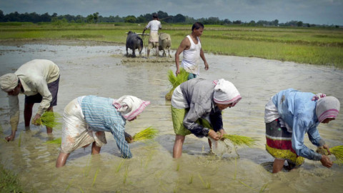 Agriculture gets a boost in Union Budget 2017